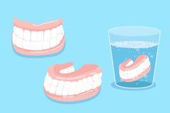 Denture Cartoo Стоковое Изображение