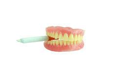 Denture with joint Stock Photo