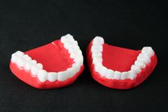Denture Model Stock Image