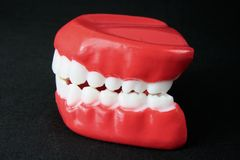 Denture Model Royalty Free Stock Photos