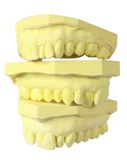 Denture Molds Stock Photography