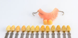 Denture shade guide Stock Image