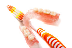 Denture and toothbrush. Denture jaw and tooth brush close up on a white background Stock Photos