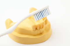 Denture and toothbrush Royalty Free Stock Photos