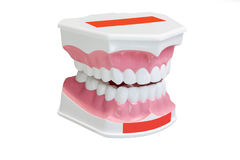 Dentures Stock Image