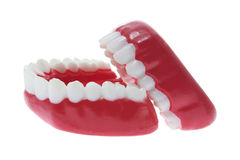 Dentures Stock Images
