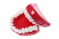 Dentures Stock Photos