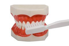 Dentures, brush your teeth. Plastic dentures, used by dentists to show you how to brush correct your teeth, isolated on white stock photography