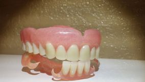 Dentures Stock Photography