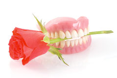 Dentures with rose. Stock Images