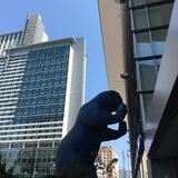 Denver blåttbjörn royaltyfri bild
