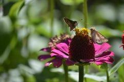Denver Botanical Gardens: Banquete de la mariposa Foto de archivo libre de regalías