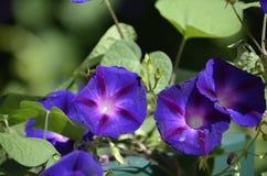 Denver Botanical Gardens: Banquete de la mariposa Fotos de archivo libres de regalías