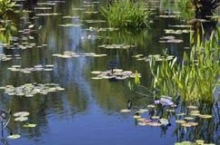 Denver Botanical Gardens: el zen watergarden el montaje Fotos de archivo