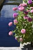 Denver Botanical Gardens: Zinnias y agua Imágenes de archivo libres de regalías
