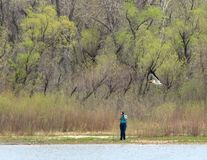 Photographer taking picture of flying white pelican in Cherry Creek State Park. stock photo