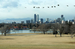 Denver-Fall-Skyline Stockbild