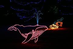 denver lights whale zoo Στοκ Εικόνες