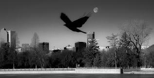 Denver Silhouette med månen Fotografering för Bildbyråer