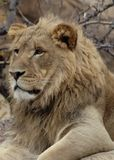 The king. Denver zoo late November stock images