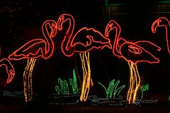 Denver Zoo Lights - Flamingo. These are Christmas lights in the shape of flamingoes at the annual Denver Zoo Lights display stock image