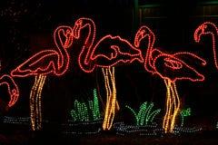 Denver Zoo Lights - Flamingo Stock Image
