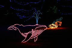 Denver Zoo Lights - Whale Stock Images
