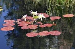 Denwerscy ogródy botaniczni: zen watergarden damy Obrazy Royalty Free