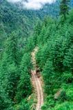 Deodar树围拢的路鸟瞰图在喜马拉雅山,sainj谷,kullu,喜马偕尔邦,印度 免版税库存图片