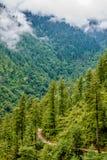 Deodar树在喜马拉雅山,sainj谷,kullu,喜马偕尔邦,印度风景  免版税库存图片