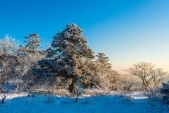 Deogyusan-Berge bei Sonnenaufgang im Winter, Südkorea Lizenzfreies Stockfoto