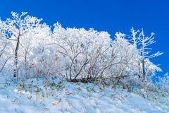 Deogyusan-Berge wird durch Schnee im Winter, Südkorea bedeckt Lizenzfreie Stockbilder