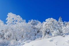 Deogyusan-Berge wird durch Schnee im Winter, Südkorea bedeckt Stockfotografie