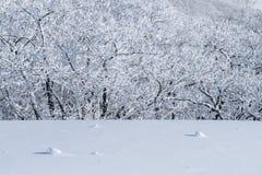 Deogyusan-Berge wird durch Schnee im Winter, Südkorea bedeckt Lizenzfreie Stockfotografie