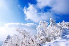 Deogyusan-Berge wird durch Schnee und Morgennebel im Winter bedeckt Stockbilder