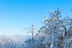 Deogyusan in de winter Royalty-vrije Stock Foto's