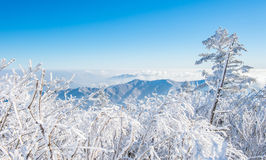 Deogyusan in de winter, Korea Stock Fotografie