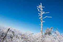 Deogyusan in de winter, Korea Royalty-vrije Stock Fotografie