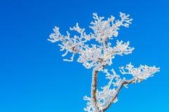 Deogyusan in de winter, Korea Royalty-vrije Stock Foto