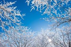 Deogyusan in de winter, Korea Royalty-vrije Stock Afbeelding
