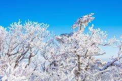 Deogyusan en el invierno, Corea foto de archivo libre de regalías