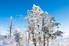 Deogyusan im Winter, Korea Stockbilder