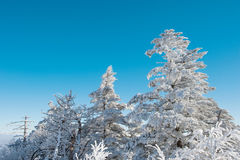 Deogyusan im Winter, Korea Lizenzfreie Stockbilder