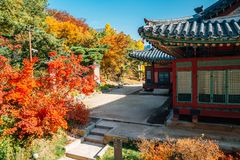 Deoksugung Palace with maple in Seoul, Korea. Deoksugung Palace with autumn maple in Seoul, Korea royalty free stock images