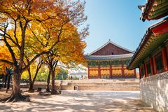 Deoksugung Palace with maple in Seoul, Korea. Deoksugung Palace with autumn maple in Seoul, Korea royalty free stock photography