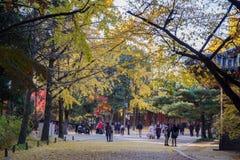 At Deoksugung. Palace Seoul , Korea