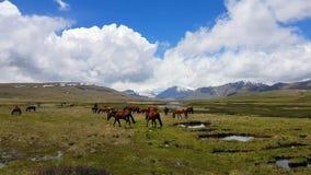 Deosai Nationaal Park, Astore-Vallei, Gilgit Baltistan, Noordelijk Pakistan stock afbeelding