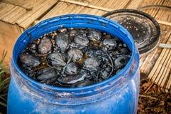 Depósito de fermentación biológico en casa de la tribu de Akha fotografía de archivo