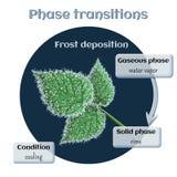 Depósito de Frost - a escarcha macia na framboesa sae Transição de fase de gasoso a de circuito integrado Fotos de Stock Royalty Free