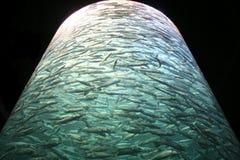 Depósito lleno enorme de pescados Imagenes de archivo